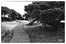Fotografía en Blanco y Negro-058