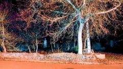 Fotografía Nocturna-090